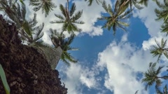 Tropical Paradise - Palm Trees Against Blue Sky. Timelapse Stock Footage