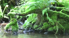 Roots In The Water - stock footage
