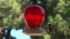 Humming bird drinking bird feeder red backyard nature beauty природа Stock Footage