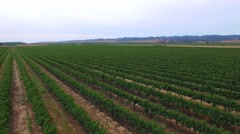 Aerial California grape farm 2 Stock Footage