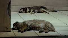 4K Homeless dogs sleeping on busy street at night,people pass by Arkistovideo