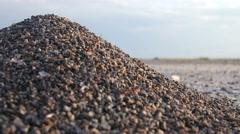 Ant hill macro sunset shot - stock footage