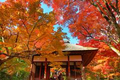 fall season at Deva of Jojakukoji temple - stock photo