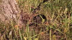 Black snake, Viper Stock Footage