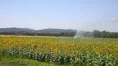 Sunflower field Stock Footage