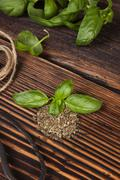 Stock Photo of Aromatic culinary herbs, basil.