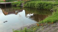 Goose expanse - stock footage