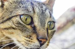 Stock Photo of cat portrait original