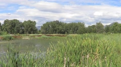 Pond With Trees and Clouds in the Background on a Windy Summer Day Stock Footage