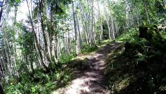 Walking path in the mountain forest in the summer Stock Footage