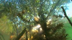 Underwater Tree and Grass Illuminated By Sunlight Stock Footage