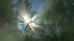 The reflection of tree branches and sunlight in the fresh water. Stock Footage