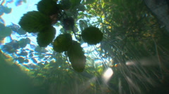 The view from underwater  on the reflection of tree branches. Stock Footage