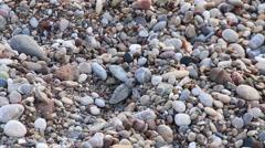 Turtle baby (Caretta carretta ) crawls to the sea. Cirali, Turkey Stock Footage