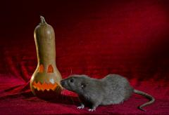 Jack-o'-lantern. - stock photo