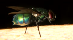 Green fly Stock Footage