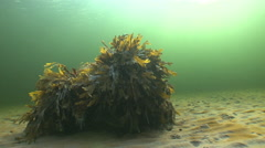 The underwater islet  of the seaweeds  illuminated by sun rays Stock Footage