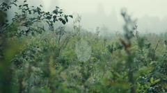 close-up cobweb on the  grass - stock footage