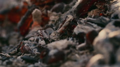 Hot coals in the fire - stock footage