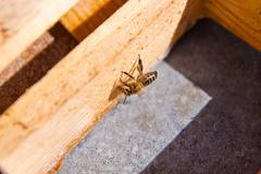 ?lose up view of the working bee. Stock Photos
