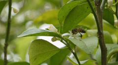 A Bee flying from one flower to the next Stock Footage
