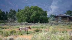 HORSES THROUGH HEAT WAVES Stock Footage