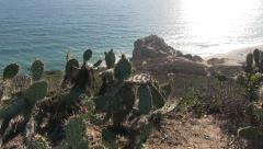 View from cliff with cactus in the wind (Point Dume) Stock Footage