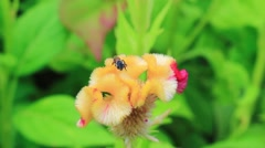 Bees collecting nectar from flower Stock Footage