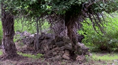 Small rock wall under tree on cloudy day Stock Footage