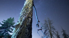 3 Axis Motion Control Time Lapse of Starry Sky over Alpine Trees -Long Shot- Stock Footage