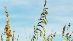 Sea Oats at the Beach Blue Skies, 4K - stock footage