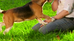 Woman with her beautiful beagle in park. Slow motion Stock Footage