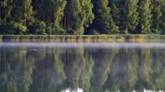 Foggy morning. Morning mist moving over the lake. Stock Footage