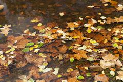 Abstract background of autumn leaves - stock photo