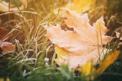 fallen autumn leaves on grass in sunny morning light - stock photo