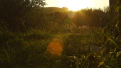 Wildflowers on a scenic sunset in Altai, Russia Stock Footage