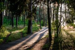 Footpath through a forest. Nida, Neringa. Lithuania Stock Photos