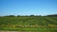 Moving along a green agricultural field (POV) - stock footage