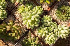 Succulent plants in pots Stock Photos