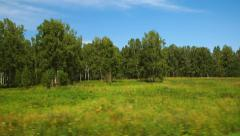 Moving along a wild fields and forest (POV) - stock footage