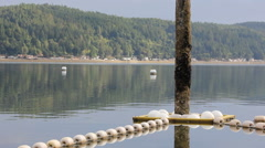 Buoys float chain and forest Stock Footage