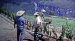 1973: Farm hand workers tending to high elevation terraced fields. Stock Footage