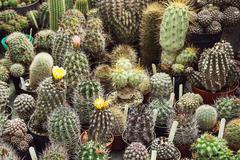 Various cacti mix Stock Photos