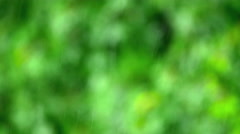 4 in 1 video! Strong rain by greenery background. slow motion capture Stock Footage