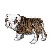 Bulldog puppy Stock Illustration