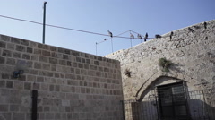 Pigeon birds on a power line in old Jaffa Stock Footage