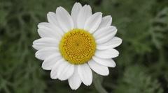 HD nature Media Flowers Stock Footage