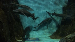 Sharks in a tank Stock Footage