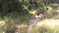 Man walks down the Emmaus Road (Traditional route of Jesus) Stock Footage