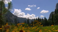 Half Dome over Carpet of Yellow Flowers In Yosemite National Park -Pan Left- Stock Footage